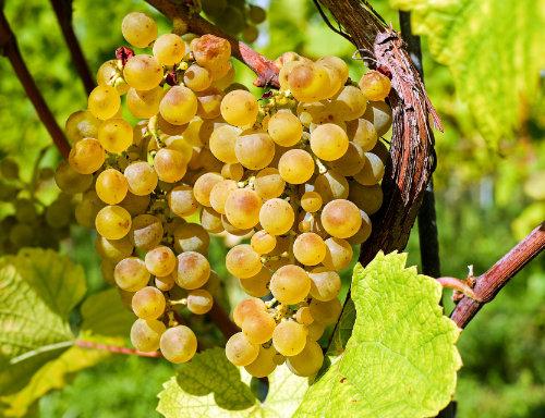 Fachbegriffe rund um den Wein